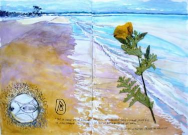 """"""" La coquille et la plante""""  plage de Bellevue"""